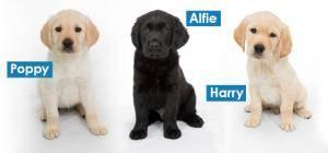 Guide dog training IPS Ceramics